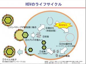HSV02