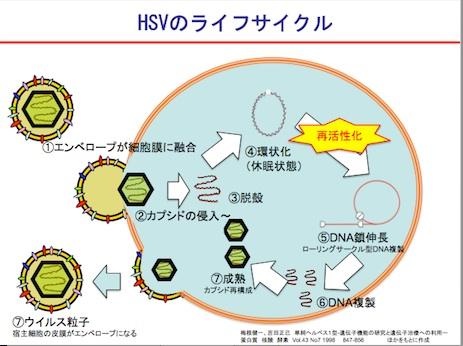 抗ウイルス薬の作用機序と耐性化...